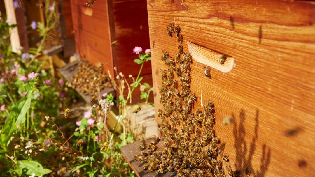 Bijen van Imkerij MeerBijen