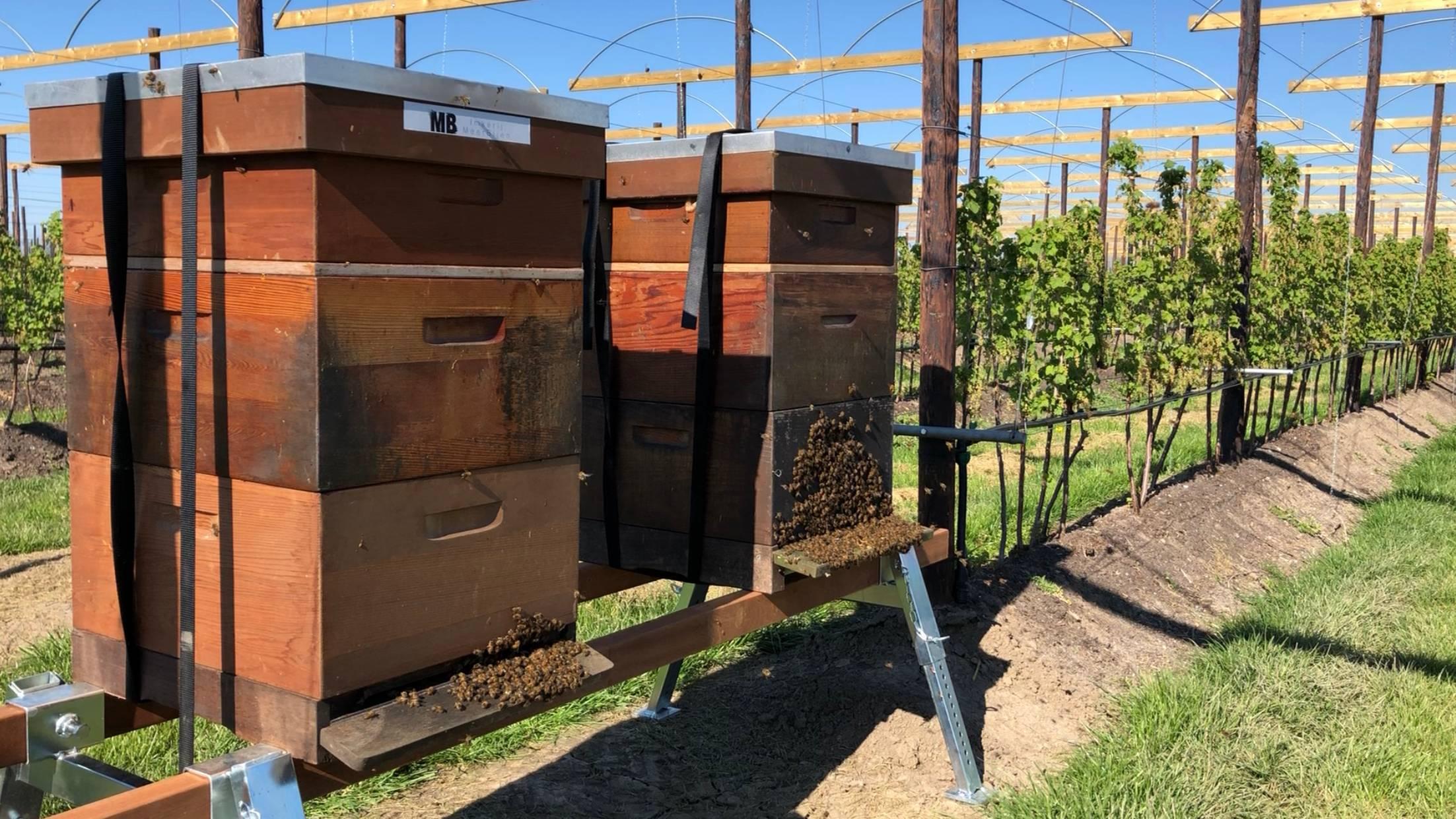 Bijenkasten van Imkerij MeerBijen op standaard