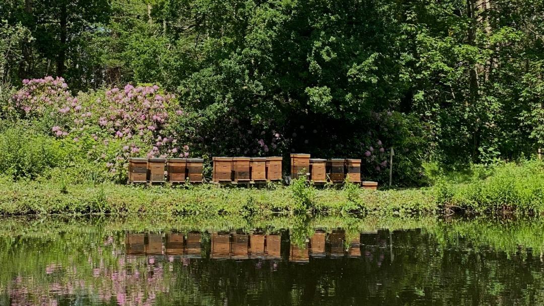 honing van imkerij MeerBijen